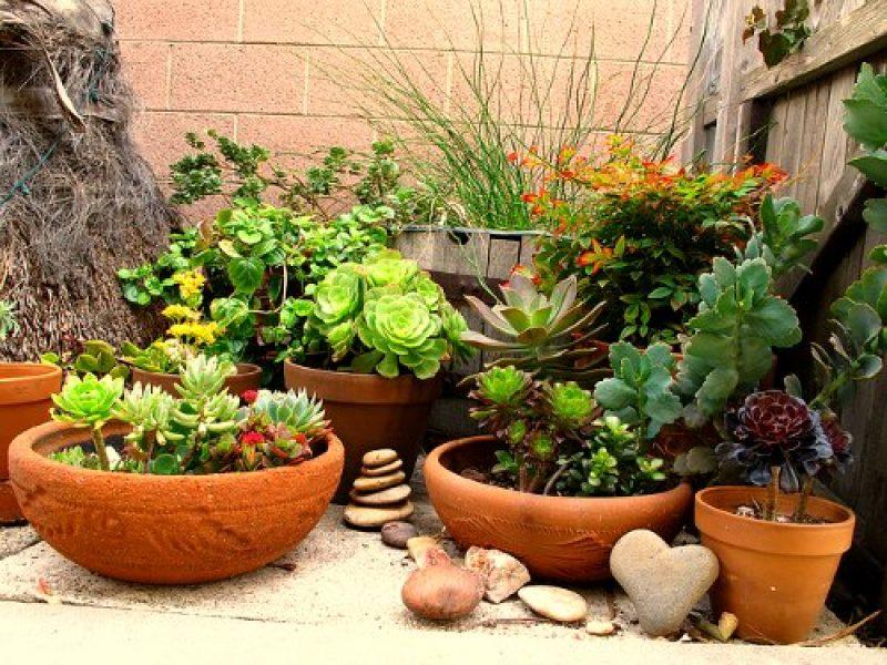 Fertilizing-potted-plants